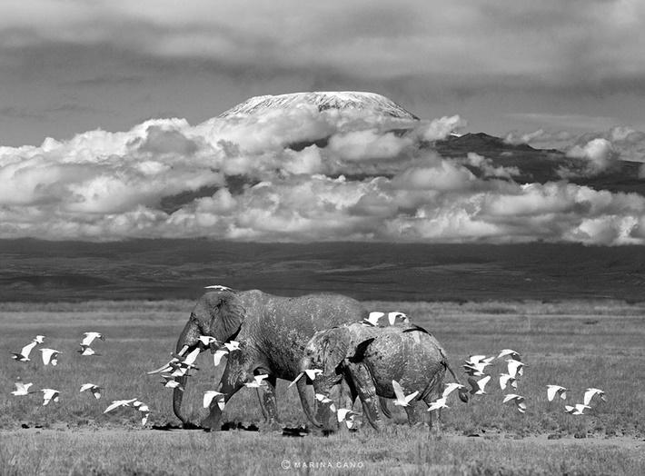 Amazing black and white animals photography by Marina Cano 01 Splendid Wild Animals Photography by Marina Cano