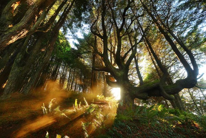 Amazing forest lanndscape photography 01 Beautiful Landscape Photography of Nature by James Appleton