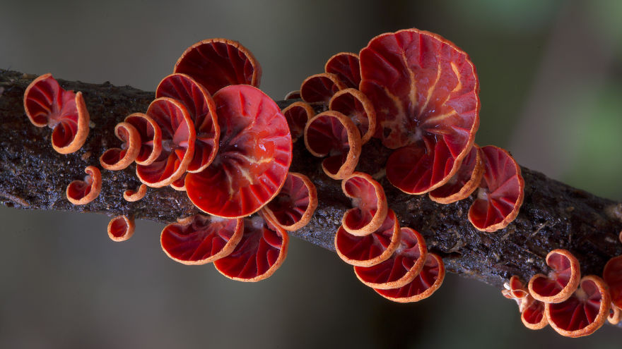 Amazing world Mashrooms Photography Steve Axford 03 World Of Australian Mushrooms Photography by Steve Axford