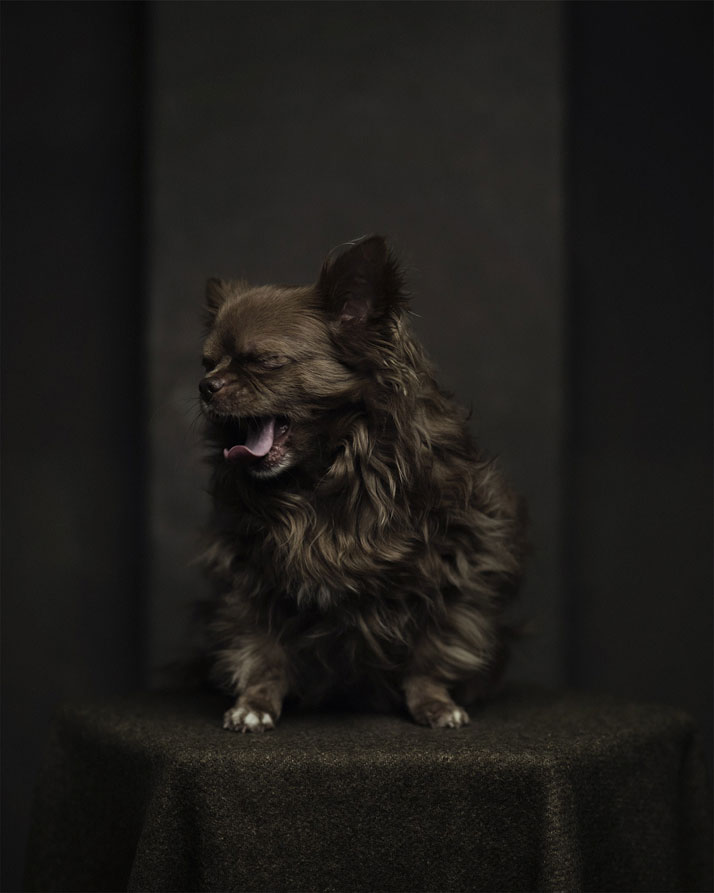 Animal Expression Portraits Photography Vincent Legrange 01 Dramatic Portraits Of Animals Expression Like Human Emotions