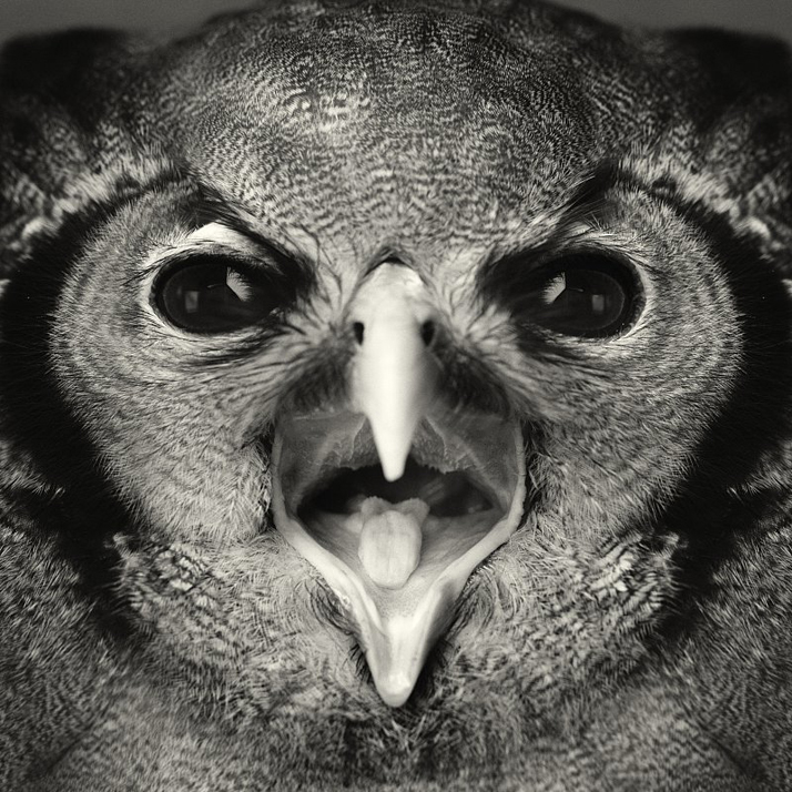 Animal Human Portraits Vincent Legrange 01 Dramatic Portraits Of Animals Expression Like Human Emotions