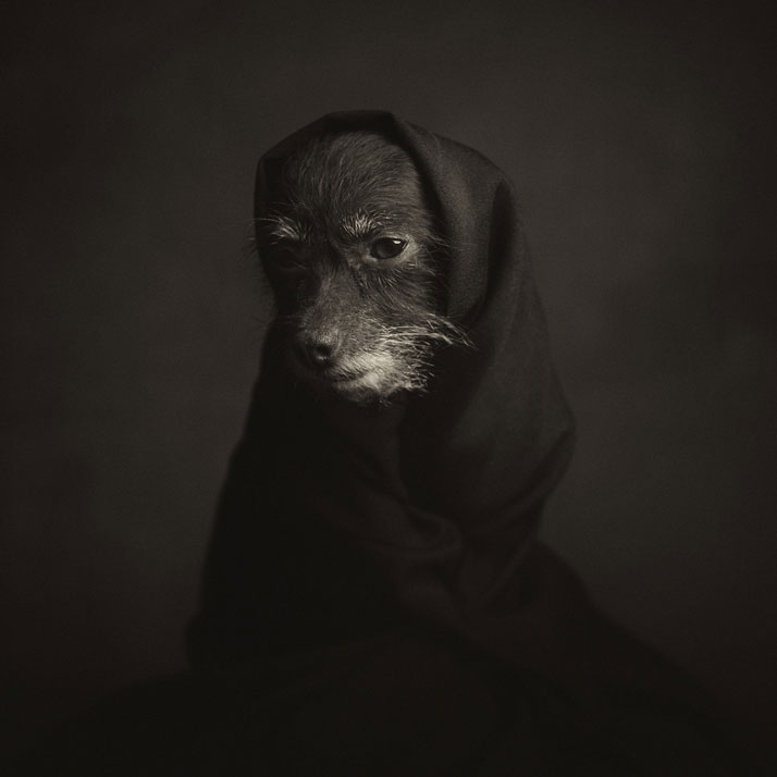 Animal Portraits Expression Photography Vincent Legrange 01 Dramatic Portraits Of Animals Expression Like Human Emotions