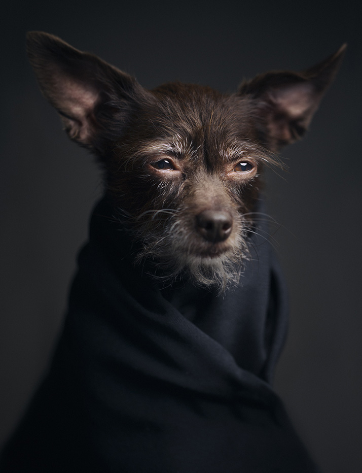 Dramatic Portraits Of Animals Expression Like Human Emotions