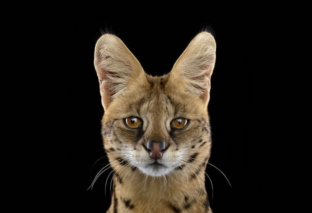 Animal photography faces Beautiful Portraits of Exotic Animals by Brad Wilson