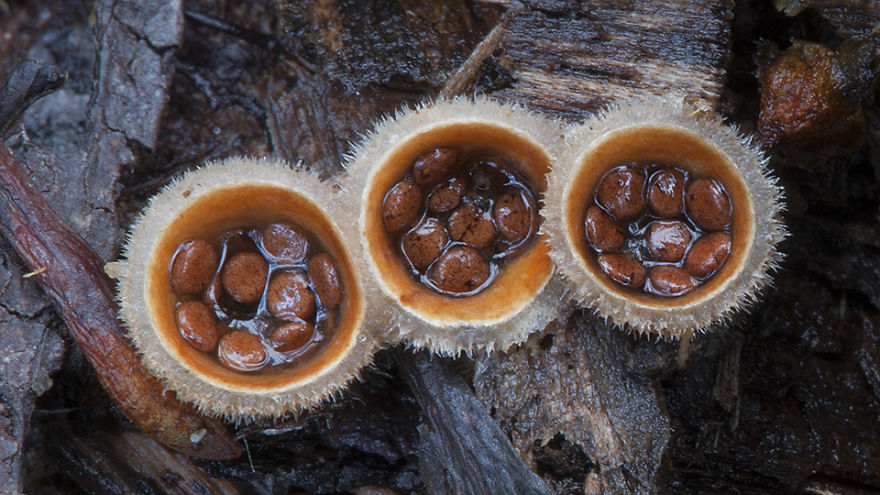 Beautiful world Mashrooms Photography Steve Axford 01 World Of Australian Mushrooms Photography by Steve Axford