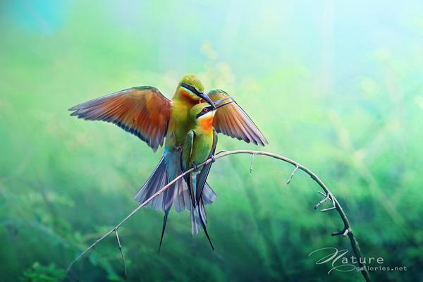 Beauty Bird photo shoot ideas 04