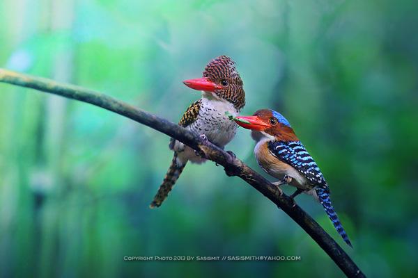 Beauty Couple of bird photography 02