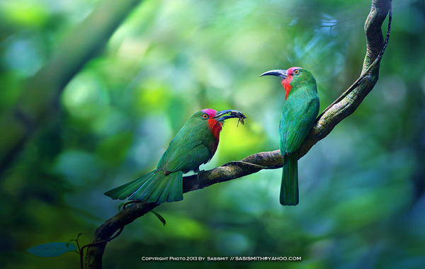 Beauty examples of bird photography 03 Examples The Beauty of Bird Photography