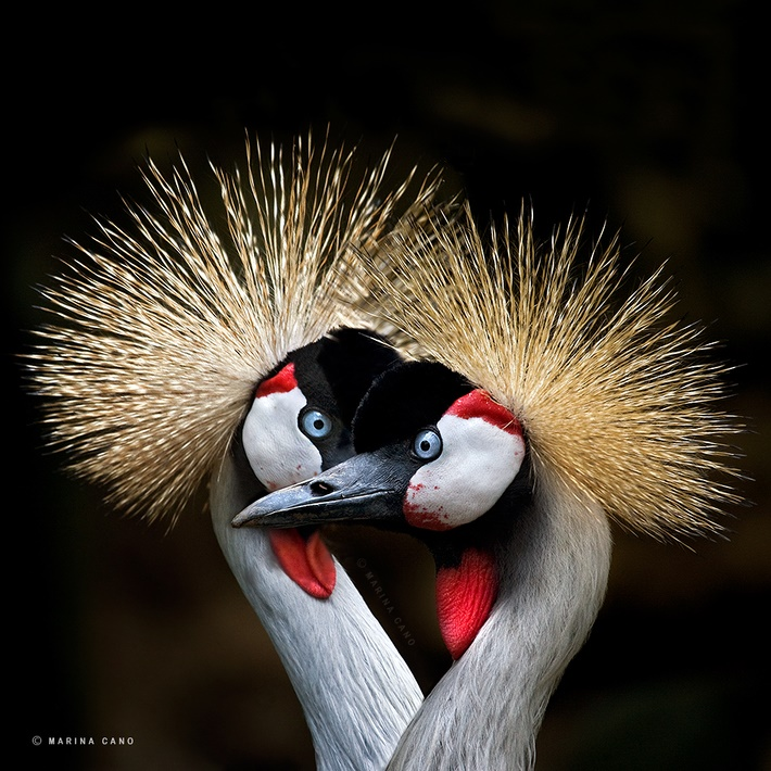 Beauty wild animals photography by Marina Cano 01 Splendid Wild Animals Photography by Marina Cano