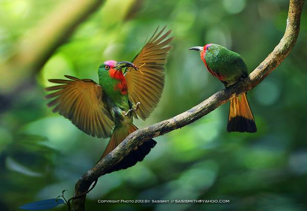 Best bird photo shoot examples 03