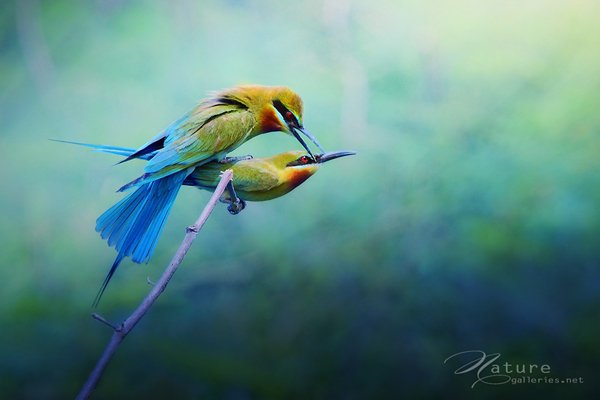 Best moment bird photo shoot 02 Examples The Beauty of Bird Photography