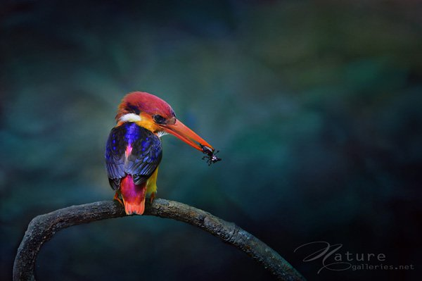 Best shoot bird photography 07 Examples The Beauty of Bird Photography