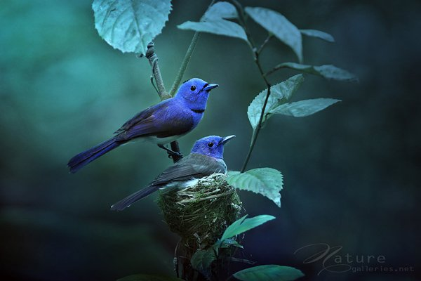 Beauty Examples Of Bird Photography