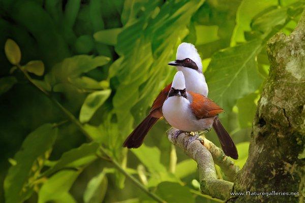 Best shoot bird photography idea 02