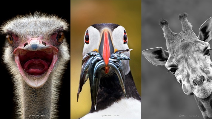 Splendid Wild Animals Photography by Marina Cano