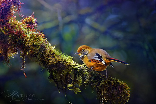 Bird photography inspiration 03 Examples The Beauty of Bird Photography