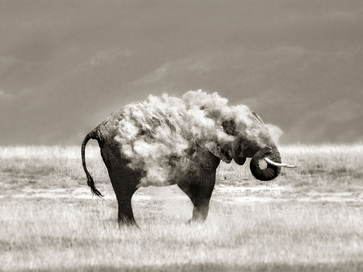 Black white wild animals photography by Marina Cano 01 Splendid Wild Animals Photography by Marina Cano