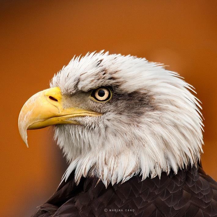 Close up wild animals photography by Marina Cano 01