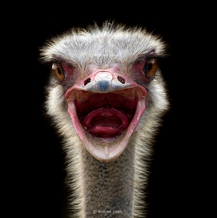 Close up wild animals photography by Marina Cano 02 Splendid Wild Animals Photography by Marina Cano