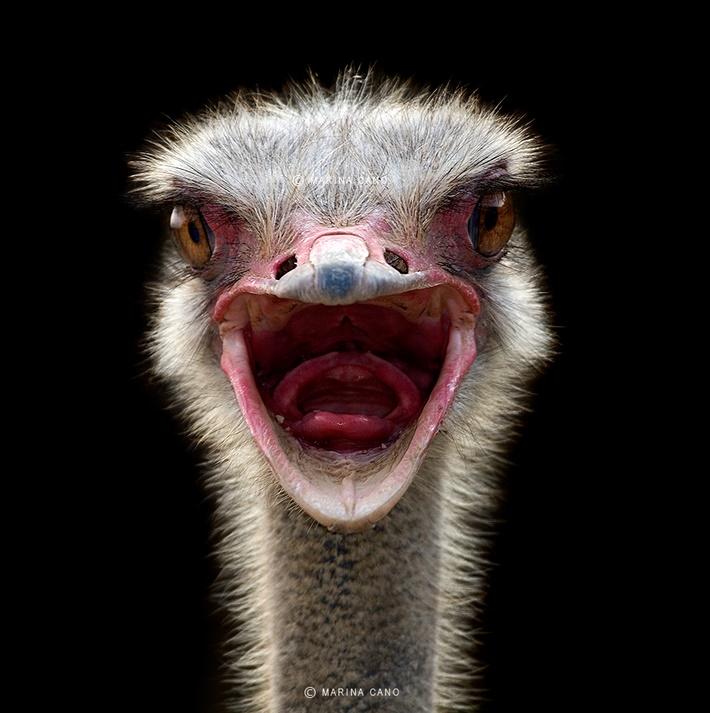 Splendid Wild Animals Photography by Marina Cano ...