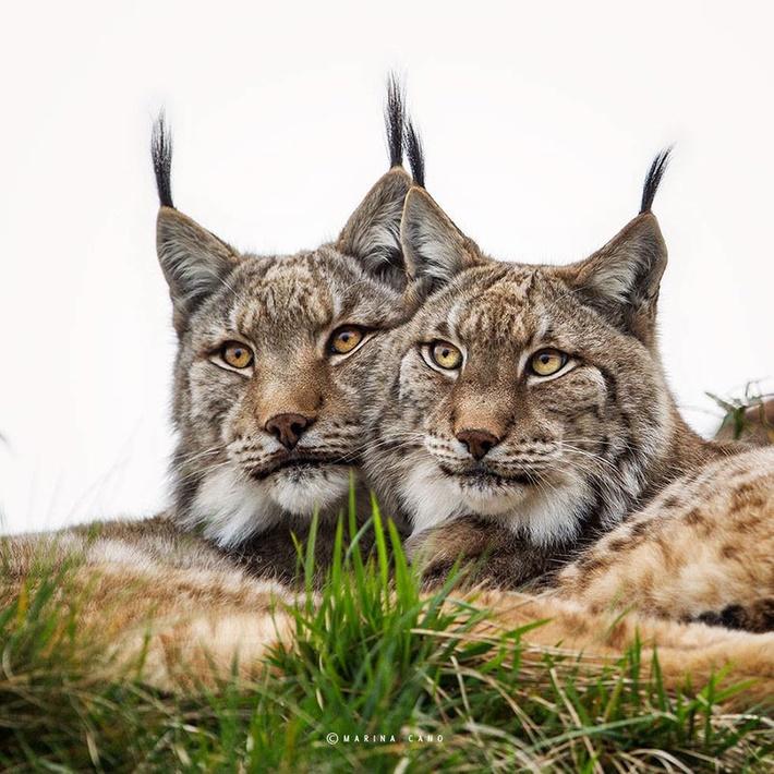Close up wild animals photography by Marina Cano 03