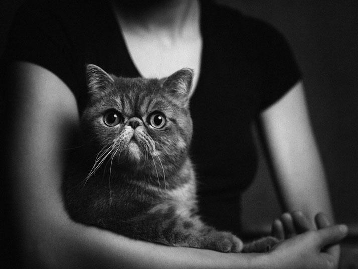 Cute Animal Human Portraits Photography Vincent Legrange 01 Dramatic Portraits Of Animals Expression Like Human Emotions
