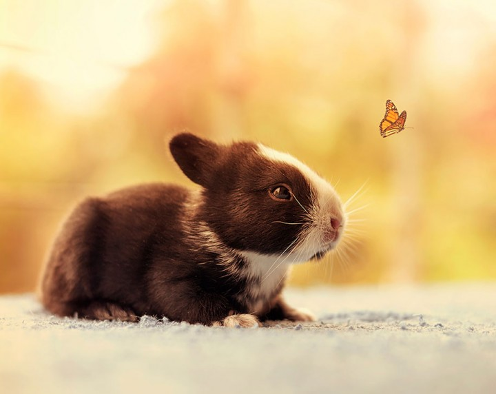 Cute Baby Bunnies photography Growing up Photographer Documents The Growth From Birth of Baby Rabbits