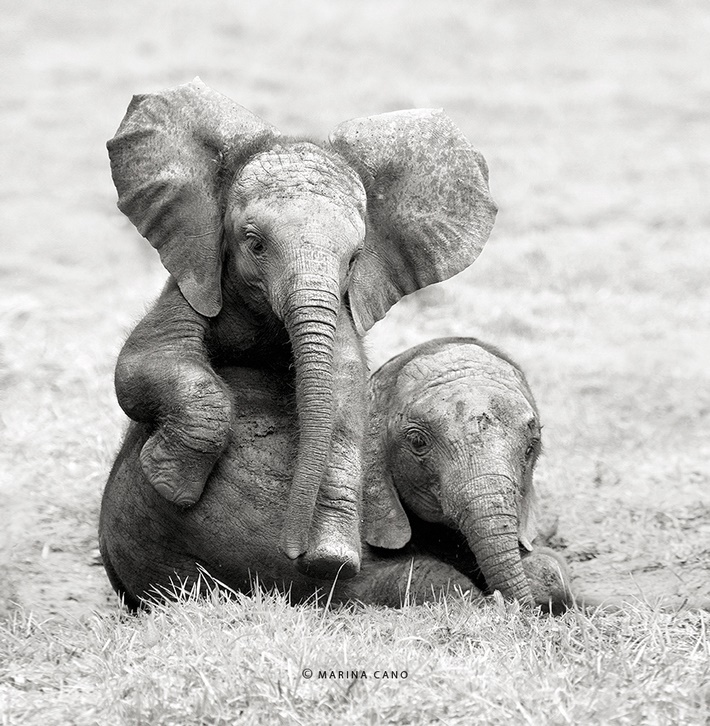 Cute elephants wild animals photography by Marina Cano 01 Splendid Wild Animals Photography by Marina Cano
