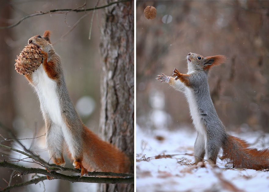 Cutest Squirrel Photography Poses Vadim Trunov 01 Adorable Squirrel Poses Photography by Vadim Trunov