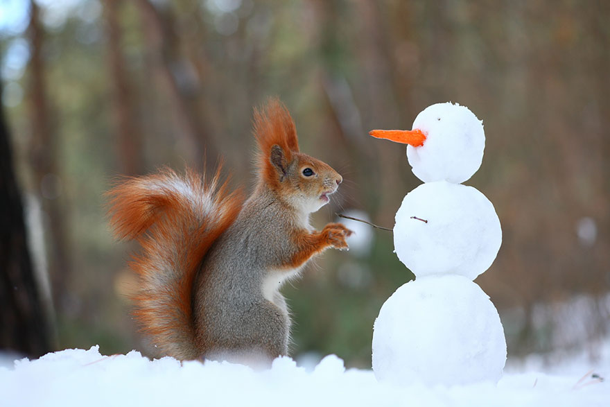 Cutest Squirrel Photos- Vadim Trunov 01