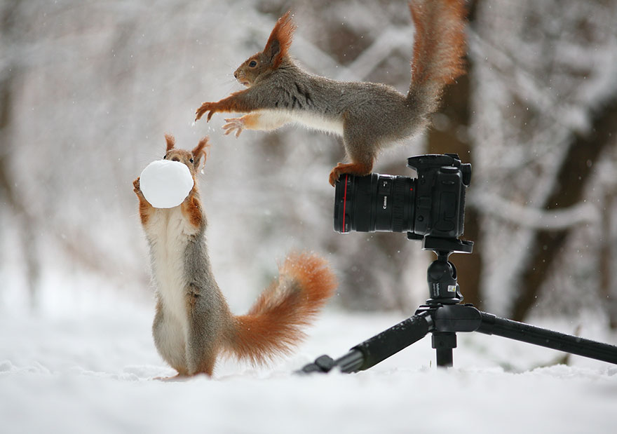 Cutest Squirrel Poses Vadim Trunov 01 Adorable Squirrel Poses Photography by Vadim Trunov