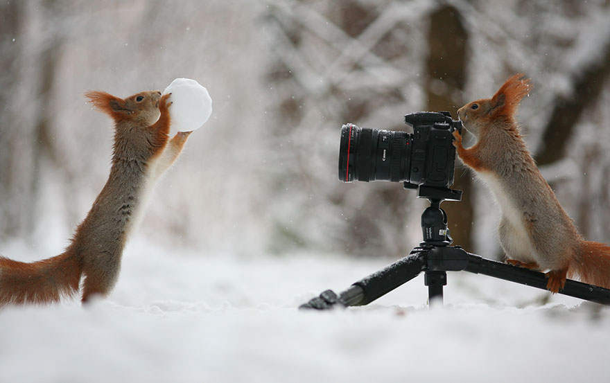 Cutest Squirrel Poses - Vadim Trunov 02