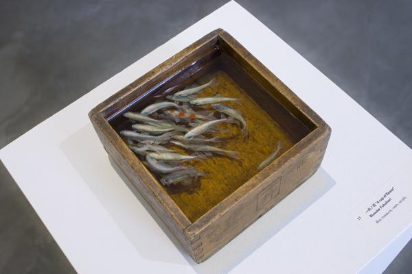 Detailed 3D Fish Paintings Riusuke Fukahori Wonderful Detailed 3D Fish Paintings