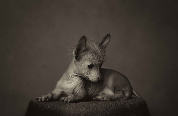 Dramatic Animal Human Portraits Photography Vincent Legrange 01 Dramatic Portraits Of Animals Expression Like Human Emotions