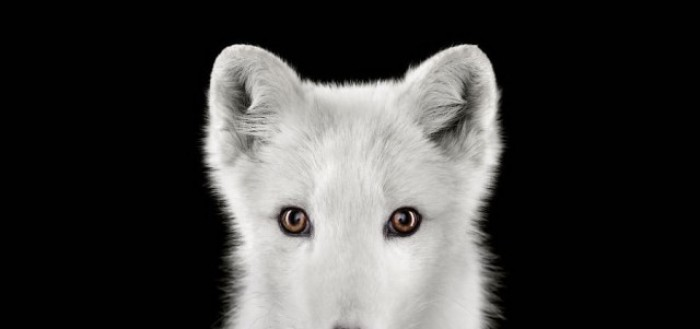 Beautiful Portraits of Exotic Animals by Brad Wilson   99inspiration