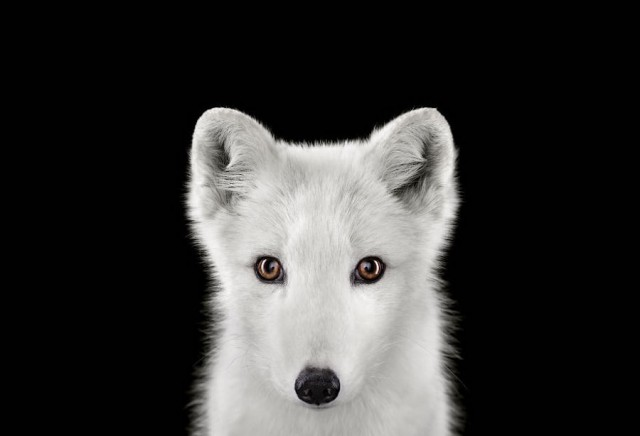 Beautiful Portraits of Exotic Animals by Brad Wilson