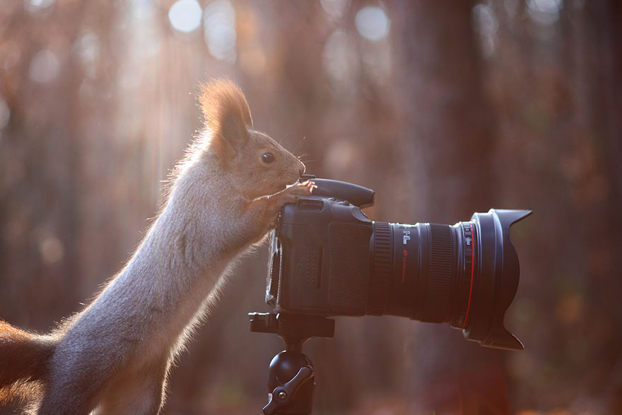 Funny Squirrel Photography Poses Vadim Trunov 01 Adorable Squirrel Poses Photography by Vadim Trunov
