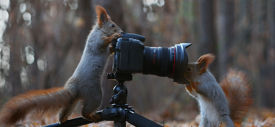 Funny Squirrel Photography Poses Vadim Trunov 02 Adorable Squirrel Poses Photography by Vadim Trunov