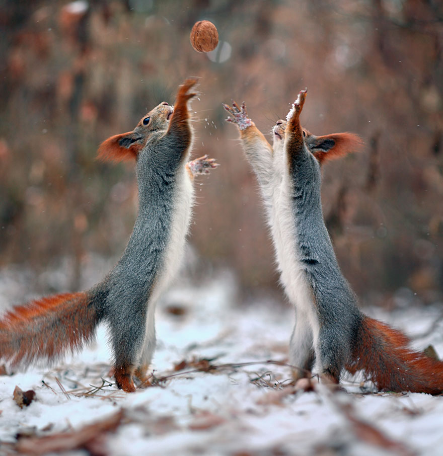 Funny Squirrel Photography Vadim Trunov 01 Adorable Squirrel Poses Photography by Vadim Trunov