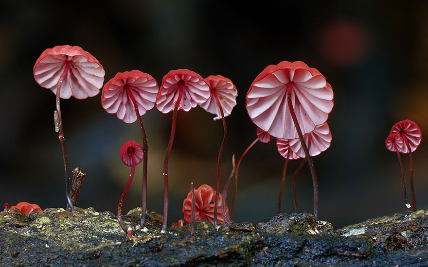 Mashrooms photography Steve Axford 01 World Of Australian Mushrooms Photography by Steve Axford