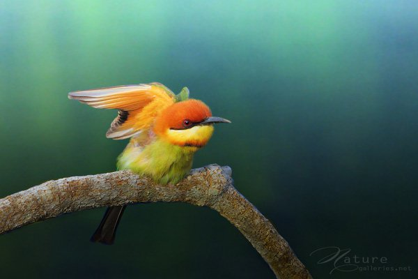 Mind blowing Bird photography examples 01 Examples The Beauty of Bird Photography