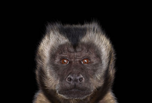 Portrait of Exotic animal expression Beautiful Portraits of Exotic Animals by Brad Wilson