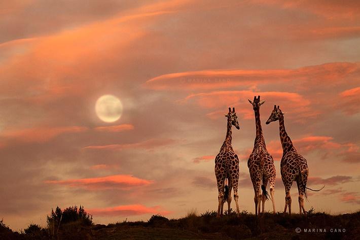 Splendid wild animals photography by Marina Cano 01