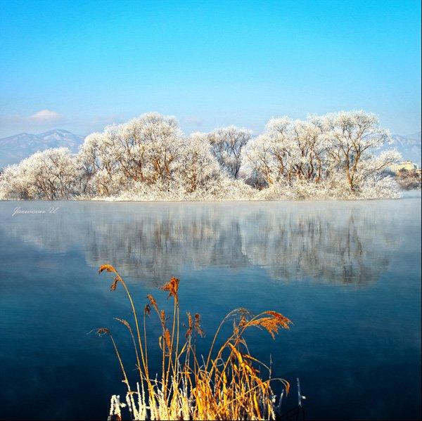 Tree Landscape Photography by jaewoon u 01 Mind Blowing Colorful Landscape Photography by Jaewoon u
