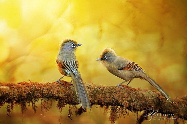 Wonderful Bird photography examples 07