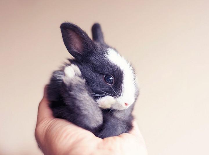 cute rabbits growing up Photographer Documents The Growth From Birth of Baby Rabbits