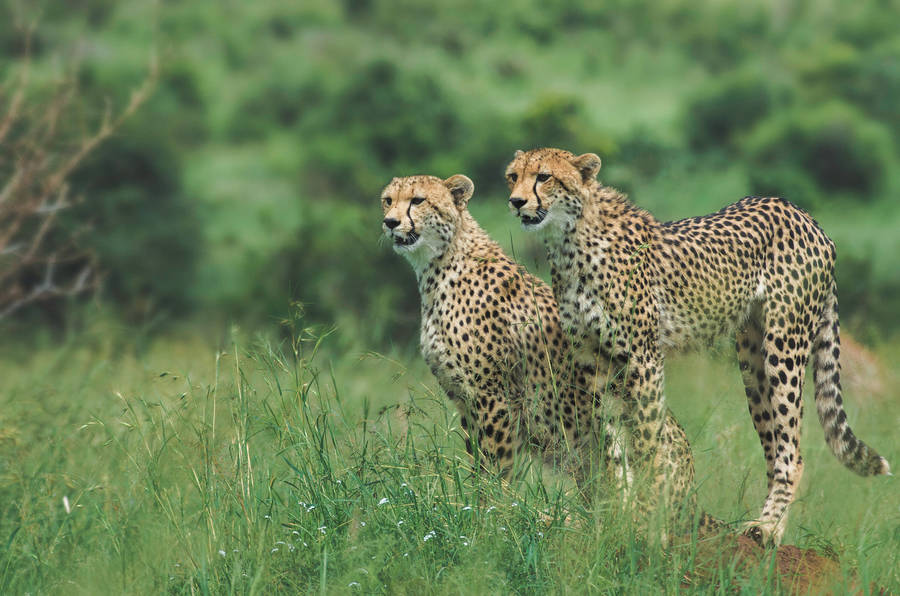 African Animal Photography by Johan Georget Amazing African Trip Photography by Johan Georget