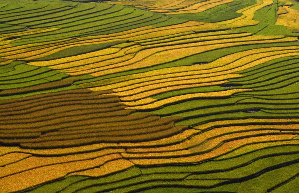 Amazing Vietnam Rice Terrace Photos by Sarawut Intarob 1024x662 Beautiful Vietnam Rice Terrace Photos by Sarawut Intarob