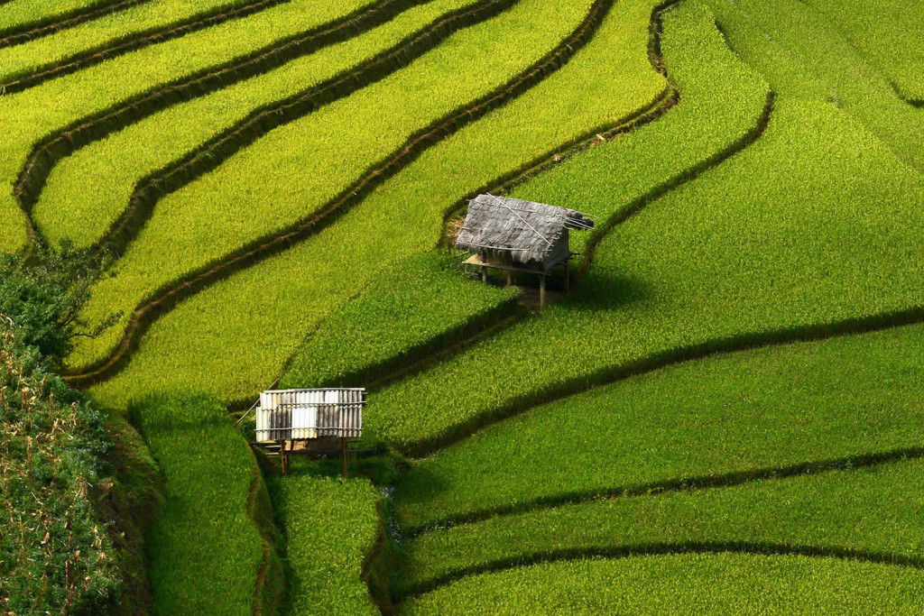 Amazingl Rice Terrace Photos by Sarawut Intarob 1024x683 Beautiful Vietnam Rice Terrace Photos by Sarawut Intarob