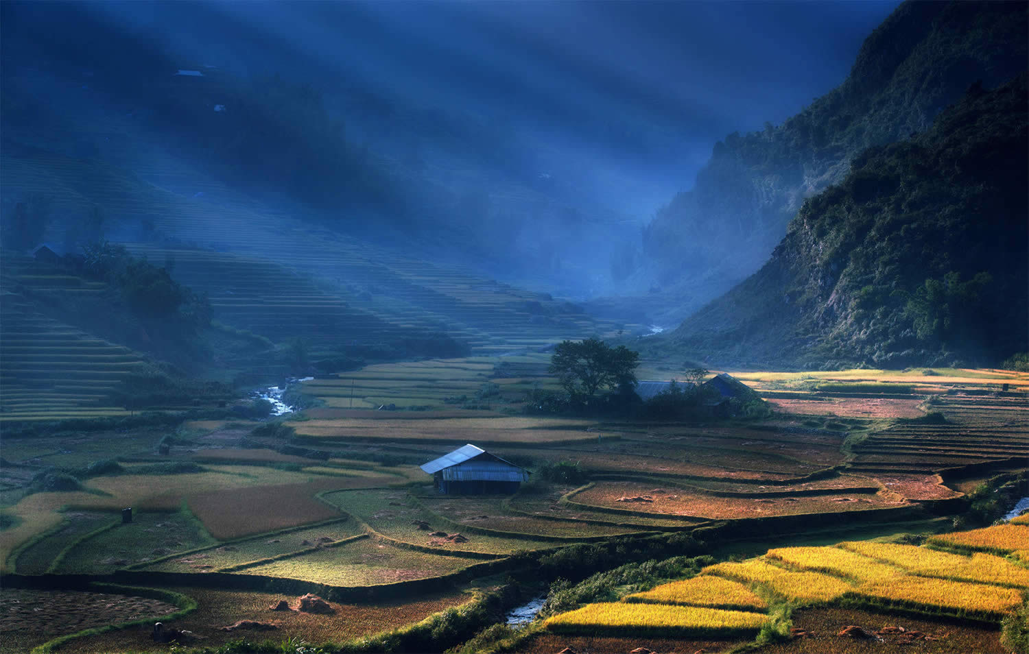 Beautiful Vietnam Rice Terrace Photos by Sarawut Intarob